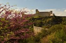 Rocca Albornoz