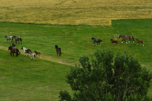 Cavalli in corsa