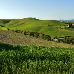 Colline di Volterra (Loc. Serraspina)